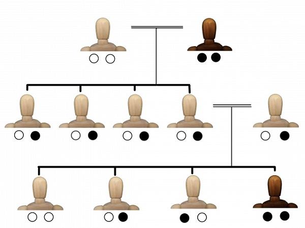 ハゲと遺伝の関係.png