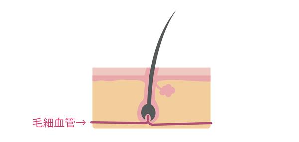髪が生える仕組み.png